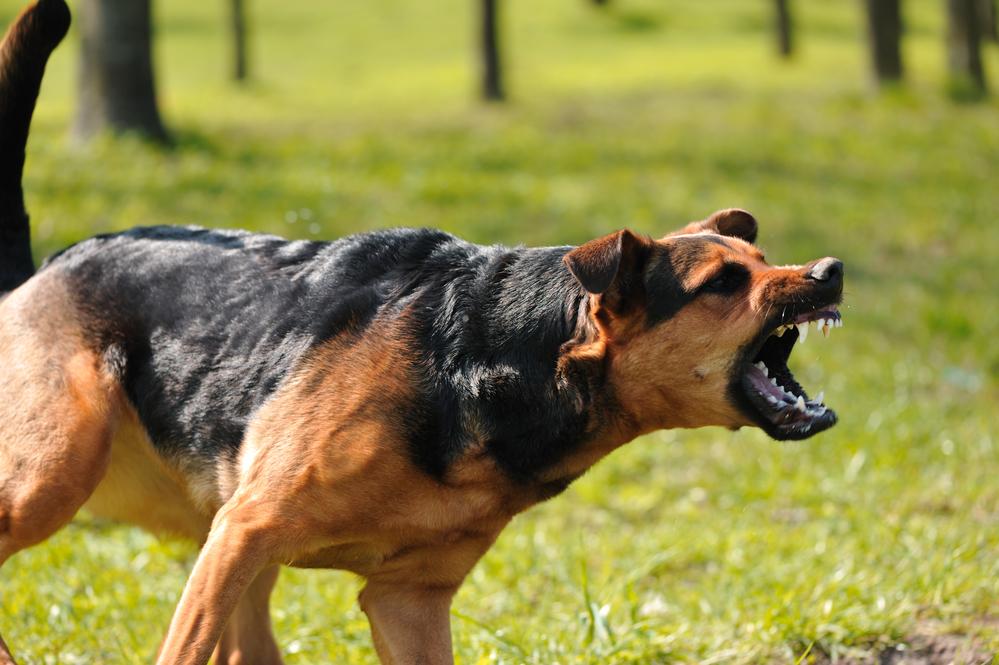 Dog Bite Injury Lawyers in Houston