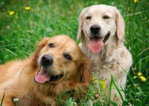Houston Dog Bite Injury Attorney DeHoyos Law